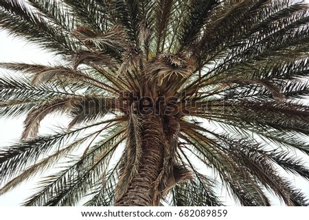 vintage close up of a palm tree ...