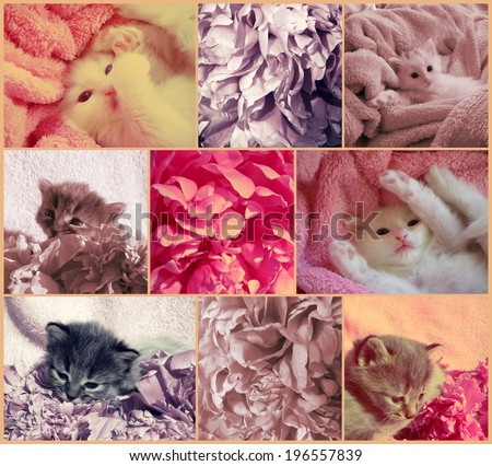 Vintage collage with baby kittens and peonies flowers. Filtered image in retro style.