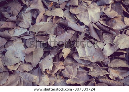 vintage color tone with soft focus of dry leaf on ground, Bo leaves dry