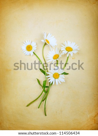 Vintage composition with a bouquet of daisies and old paper