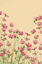 Vintage cosmos flower. 2D Art and retro style background
