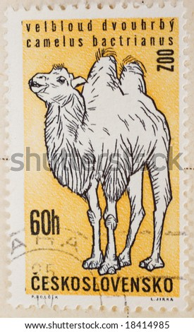 Vintage Czechoslovakian postage stamp with Bactrian Camel