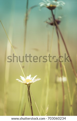 vintage daisies and grasses
