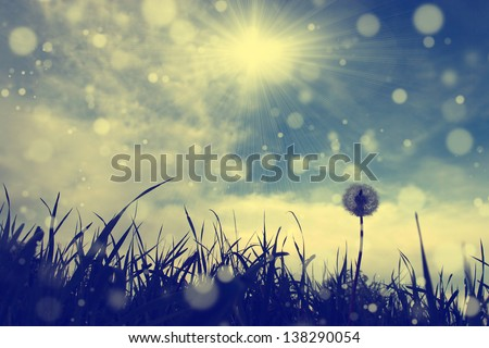Vintage dandelion with blue sky and sun flare