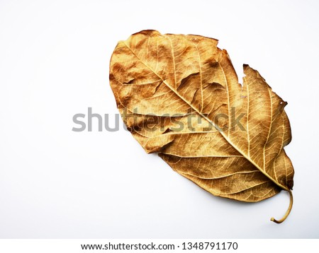 Vintage dry leaf  isolated on a white background