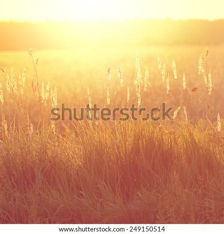 vintage field at sunrise....