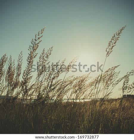 vintage field background