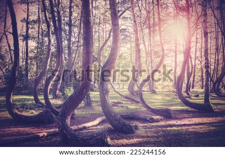 Vintage filtered picture of sunset at mysterious forest.