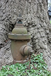 Vintage fire hydrant overgrown by a huge tree, shows endurance.