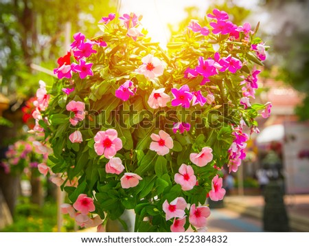 Vintage flower decor. Summer light effect.