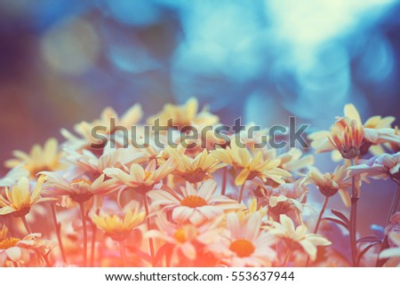 vintage flower field background ...