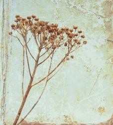Vintage flower on old book background