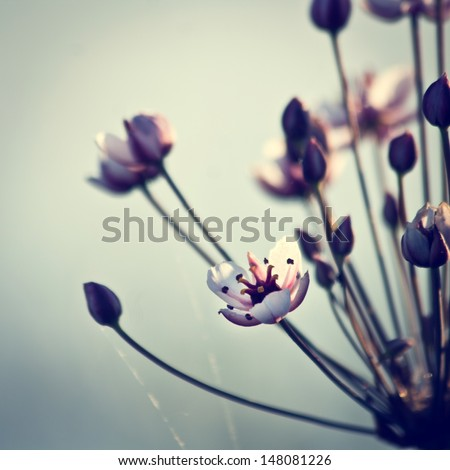 vintage flowers background