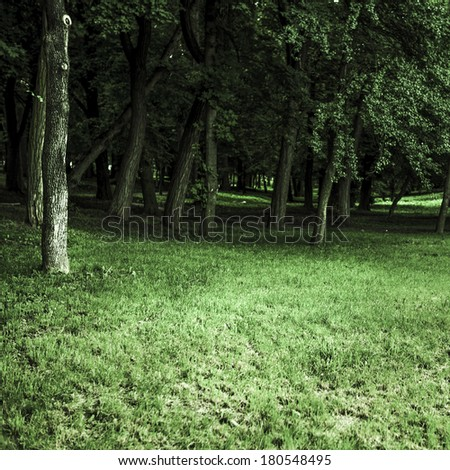 Vintage forest background - stock photo