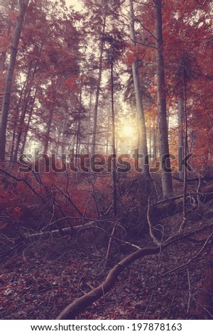 Vintage forest with sun rays in the morning  - stock photo