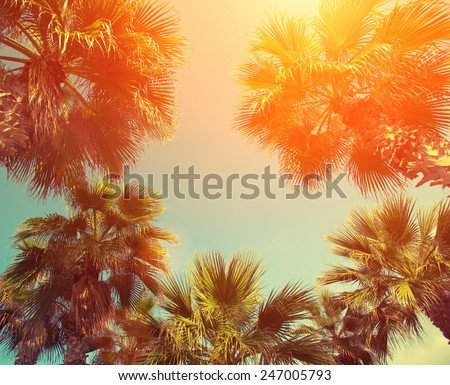 Vintage frame with tropic palm trees against sky at sunset light
