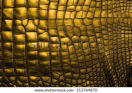 Vintage Gold Crocodile Belly Skin Texture Background.