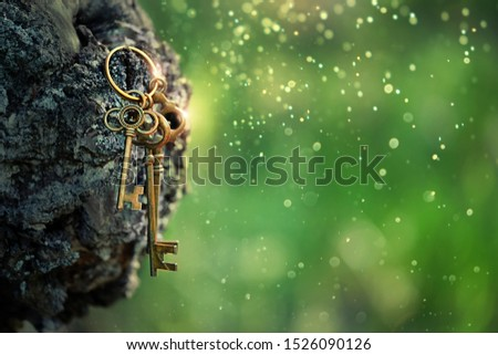 vintage golden keys on mysterious forest background. magical art composition with beautiful key, concept secret garden, mystery. close up. copy space