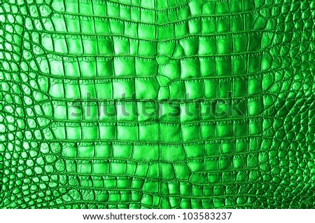 Vintage green crocodile belly skin texture.