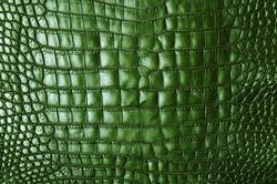 Vintage green crocodile skin texture.