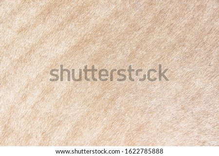 Vintage grunge drum texture , natural leather abstract background