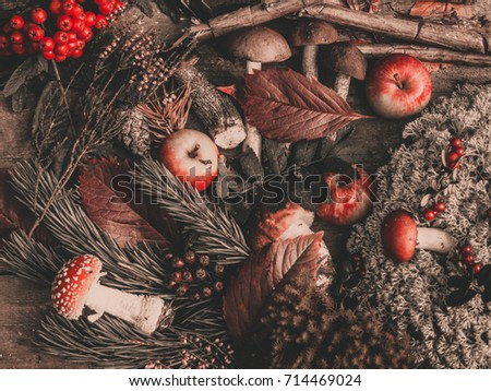 Vintage hero header image for website. Autumn still life with pine branch, cone, moss, rowan, mushrooms, wooden sticks, leafs on vintage wooden table.