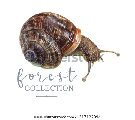 Vintage highly detailed hand drawn watercolor forest snail illustration isolated on white background. Image can be used as retro element for scrapbook, boho wedding, greeting, botany design
