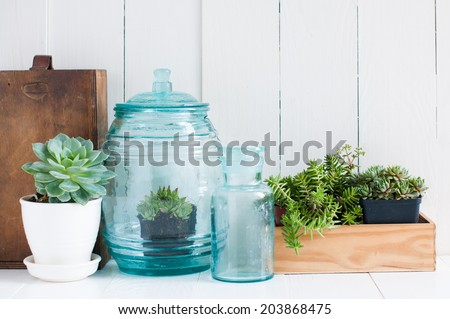 Vintage home decor: houseplants, green succulents, old wooden boxes and vintage blue glass bottles on white wooden board, cozy home interior.