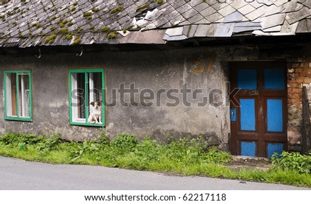 Vintage house with a dog at the window