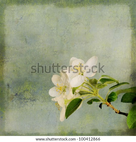 Vintage image of apple tree blossoming