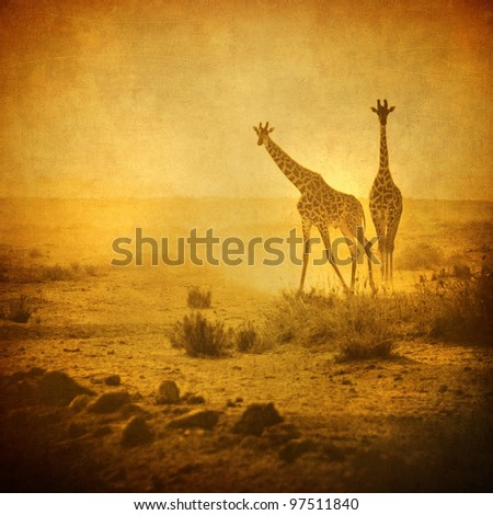 vintage image of giraffes in amboseli national park, kenya