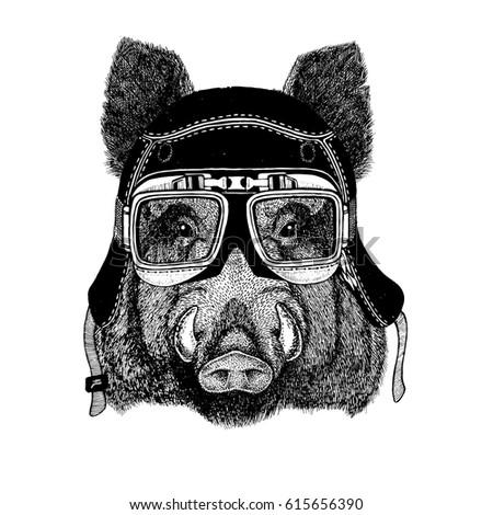 vintage images of hog for t...