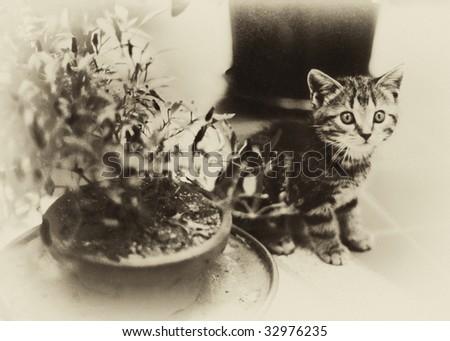 Vintage Kitten