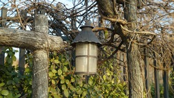 Vintage Lamp and Vine Wall Fence in the Winter Park Street