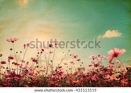 Vintage landscape nature background of beautiful cosmos flower field on sky with sunlight. retro color tone filter effect #431513119