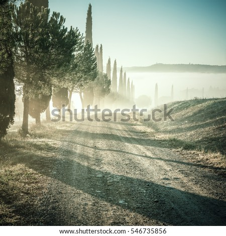 vintage landscape with cypress...