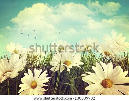 vintage look of summer daisies...