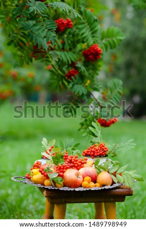 Vintage metal tray with ripe fruits on a wooden bunch in the park. Apples, pears, plums and bunches of mountain ash. Autumn, harvest time, bright colors, healthy food. Russian authentic true beauty #1489798949