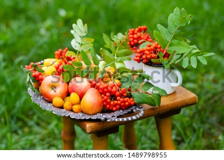 Vintage metal tray with ripe fruits on a wooden bunch in the park. Apples, pears, plums and bunches of mountain ash. Autumn, harvest time, bright colors, healthy food #1489798955