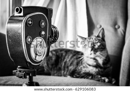 Vintage 8mm film camera and tabby cat posing on armchair - black and white.