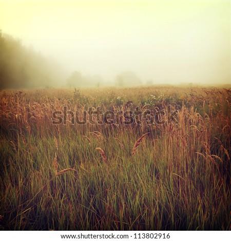 Stock Photo vintage nature background