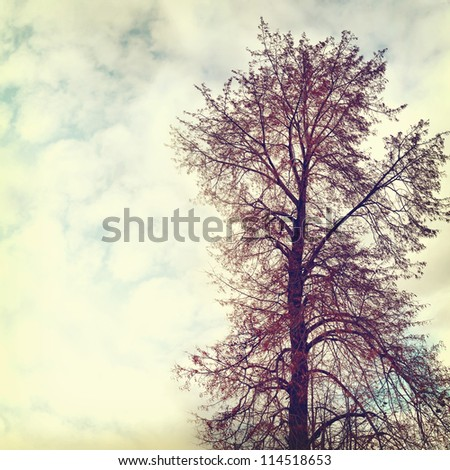 vintage nature background