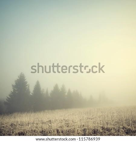 vintage nature background