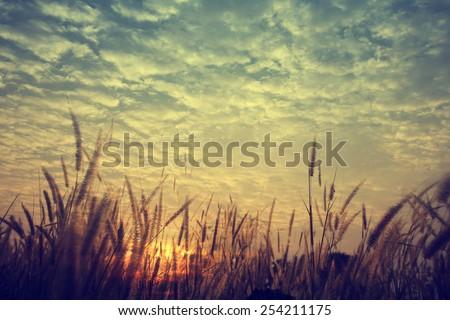stock photo vintage nature background 254211175 - Каталог — Фотообои «Природа, пейзаж»