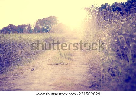 vintage nature background, morning in the countryside Street (vintage color tone image)