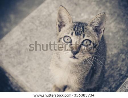 Vintage of Cute kitten