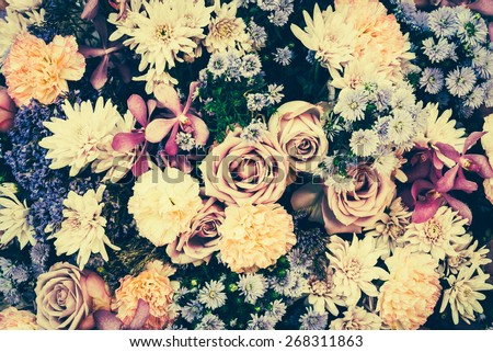Vintage old flower backgrounds - vintage effect style pictures