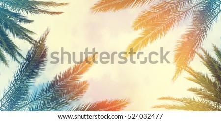 Vintage palm background texture frame