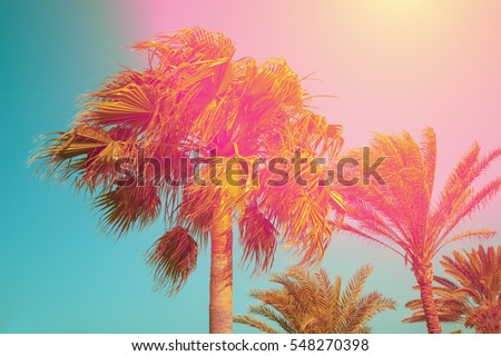 vintage palm trees against sky...