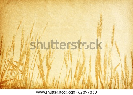 vintage paper textures. field of wheat.